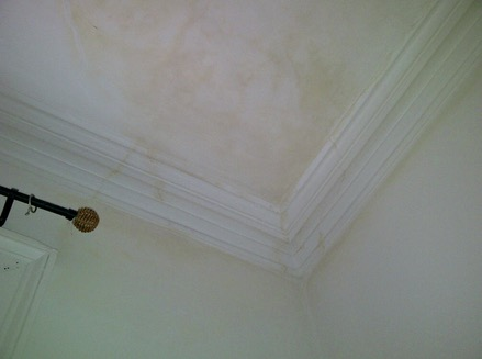 Can You Paint Ceiling Where Damp Has Come Through